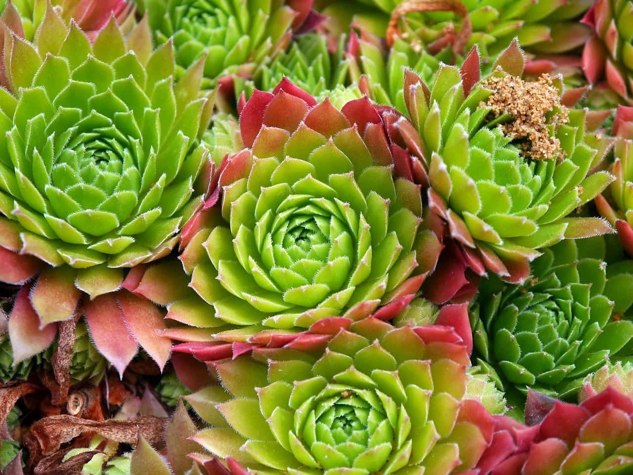 Come curare le piante grasse - Love DIY